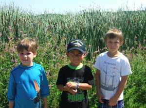 Three preschool age boys standing in sunlight by a field of tall grasses